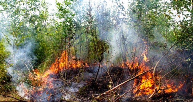 На Коломийщині рятувальники 80 разів виїжджали гасити пожежу трави. Один виїзд коштує 26 тис грн