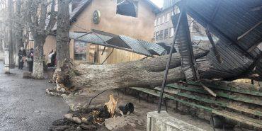 У Коломиї штормовий вітер валить дерева та пошкодив автобусну зупинку. ФОТО