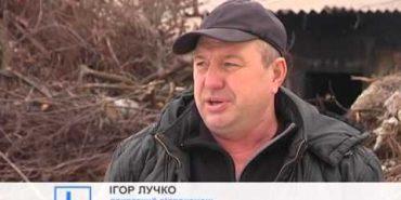 У Івано-Франківську цього року ялинки утилізовуватимуть організовано. ВІДЕО