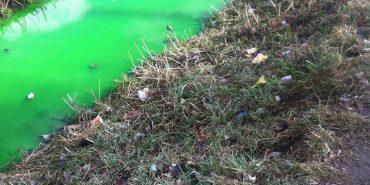 Річка Млинівка у Коломиї стала зеленого кольору. ФОТОФАКТ