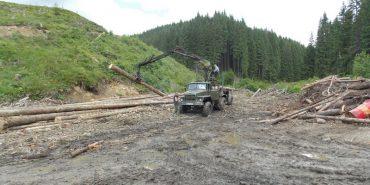 Карпатські ліси страждають від тотального знищення. ФОТО