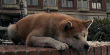 Український Хатіко: собака чекав свого господаря з роботи біля поліклініки 10 років