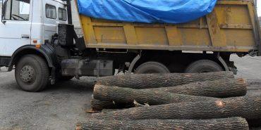 """На Коломийщині затримали вантажівку, що перевозила деревину породи """"дуб"""" без документів. ФОТО"""