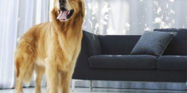 Львів'ян зобов'язали реєструвати домашніх собак