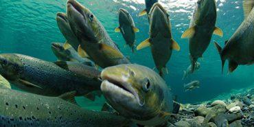З 1 квітня на Прикарпатті буде діяти заборона на вилов риби