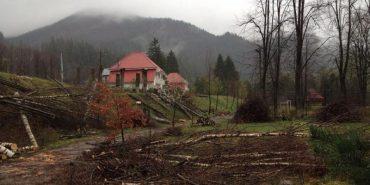 У селі Татарові Яремчанської міської ради масово вирубали молоді дерева