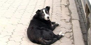 Коломийські волонтери просять містян не топити собак. ВІДЕО