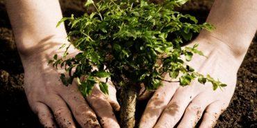 На Коломийщині розпочався місячник озеленення, прибирання і благоустрою