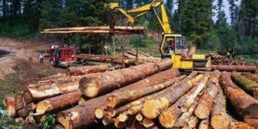 Кабмін заборонив вирубування дерев та звільнив Голову Держлісагенства