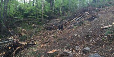 Міністр екології вражений масштабами незаконної вирубки лісів на Прикарпатті