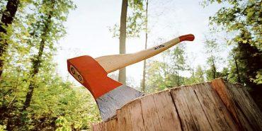 За три зрубаних дерева прикарпатцю грозить до трьох років позбавлення волі