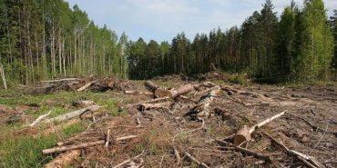 Головного екоінспектора Івано-Франківщини звільнили через масову вирубку лісів у заповіднику