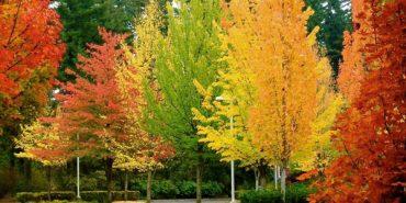 Споглядання дерев допомагає в боротьбі зі стресом – дослідження