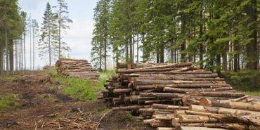 Незаконну вирубку лісів на 1,2 мільйона гривень виявили на Прикарпатті
