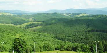 """Екологи стверджують, що ліси нацпарку """"Гуцульщина"""" під загрозою"""