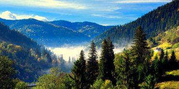На збереження карпатських лісів виділили 14 млн євро