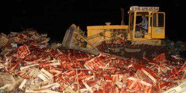 У Росії знищили бульдозером  38 тонн полуниці з України