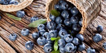 Чорниця — чудо-ягода, яка лікує сто хвороб