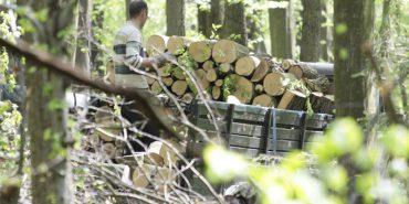 На Прикарпатті лісник отримав хабар за незаконний відпуск дуба