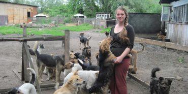 Собача комуна ген за містом: про притулок для тварин у Коломиї