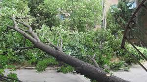 На житловий будинок в Івано-Франківську впало дерево