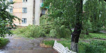 У Коломиї через негоду дерево впало на пішохідну частину вулиці. ФОТОФАКТ