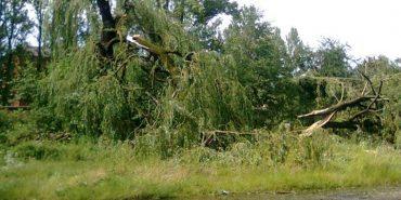 Подробиці загибелі 57-річної жінки з Прикарпаття, на яку впало дерево під час негоди