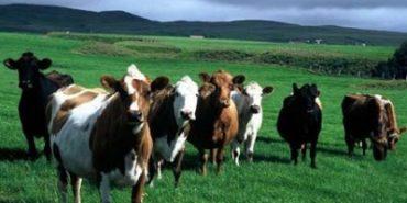 Депутатам облради  покажуть корів і поля Коломийщини
