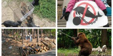 ВР заборонила пересувні зоопарки та дельфінарії без морської води