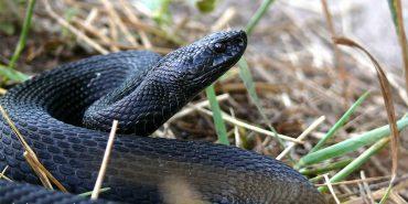 На Коломийщині змія вкусила 4-річну дитину