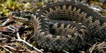 На Прикарпатті на 14-річного підлітка напала змія