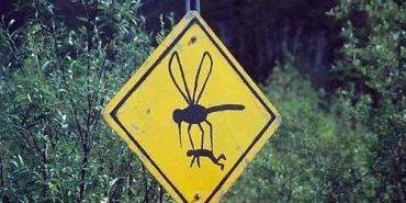 Вчені вияснили 4 типи людей, яких люблять комарі