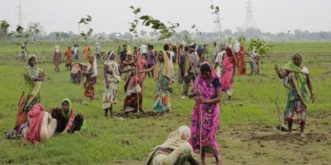 Світовий рекорд: за добу в Індії посадили майже 50 мільйонів дерев