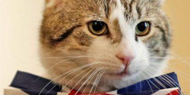 Кіт Ларрі офіційно обіймає посаду головного мишолова в резиденції британських прем'єр-міністрів