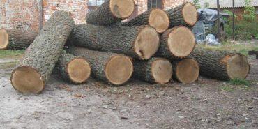 Коломийські правоохоронці зафіксували незаконну вирубку дубів