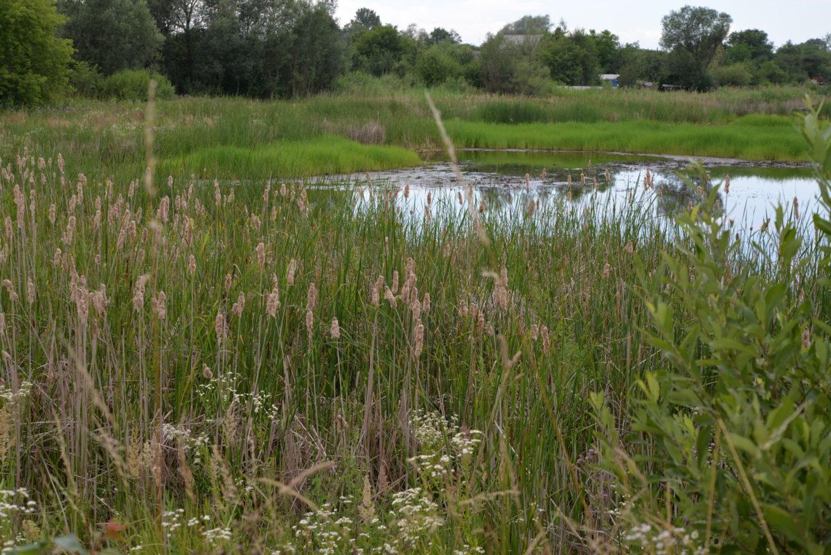 Озеро поряд зі сміттєзвалищем.