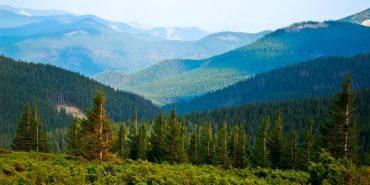 Прокуратура викрила чиновників на відчуженні земель Карпатського природного парку