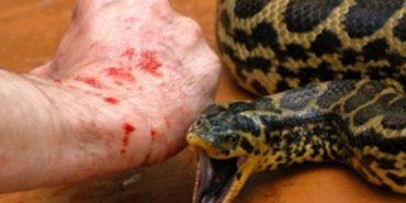 Змії покусали людей у двох районах Франківщини, чоловіки – в реанімації