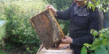 Прикарпаття займає 7 місце в Україні по бджільництву