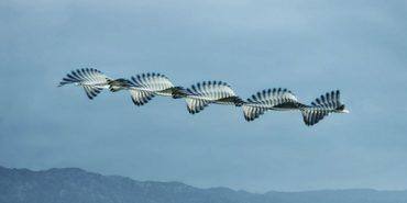 Іспанський фотограф знімає птахів у польоті у техніці 150-річної давнини