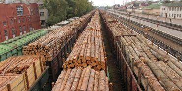 На Закарпатті арештували 17 вагонів із лісом, які росіяни намагалися вивезти до Чехії