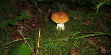 На Прикарпатті розпочався сезон грибів