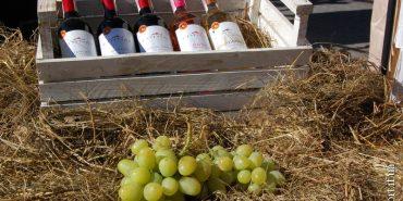 На Прикарпатті з'їхалися винороби і виноградарі з цілої України. ФОТО