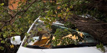 Дерево впало на автівку, яка прямувала до Яремче