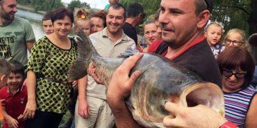 Велетенську рибу впіймали на Коломийському міському озері. ВІДЕО