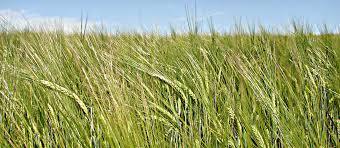 На Прикарпатті створили штаб з питань захисту прав агровиробників