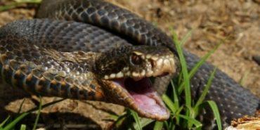 На Прикарпатті однорічна дівчинка і пенсіонерка постраждали від укусу змії