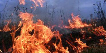 Прикарпатські рятувальники вкотре закликають не палити суху траву