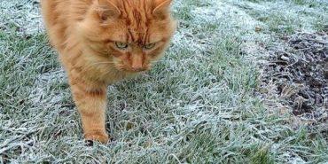 На Прикарпатті очікуються заморозки