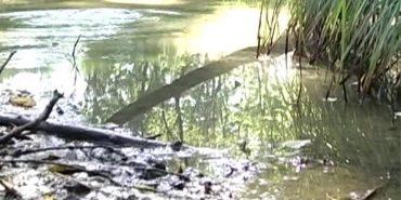 """На Коломийщині пересихають криниці: """"Воду треба шукати як золото"""""""